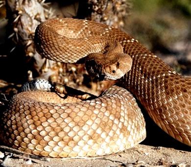 los reptiles 2