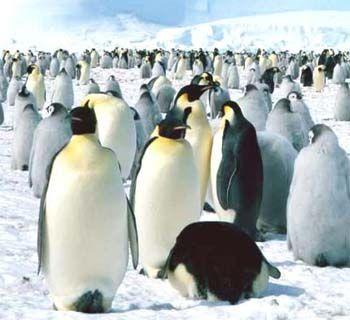 pinguinos 3