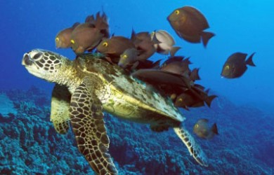 tortuga marina1