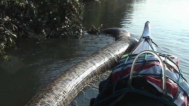 anaconda boliviana 2