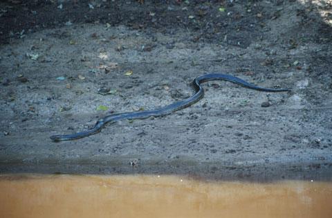 anaconda boliviana 3