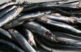 anchoas 2