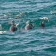 delfín burrunanm 1