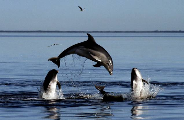 delfín burrunanm 2