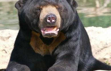 oso dom solitario 1