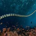 serpiente marina 1
