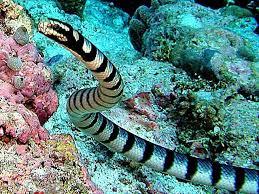 serpiente marina 2