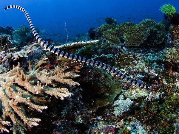 serpiente marina 3
