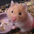 Informacion sobre el hamster