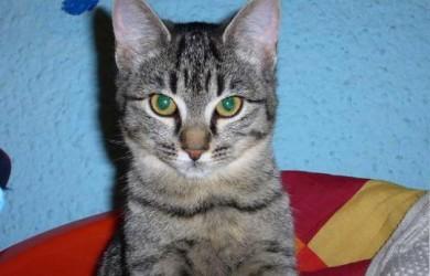 informacion sobre gatos