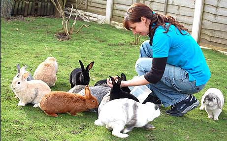Informacion sobre el conejo como mascota