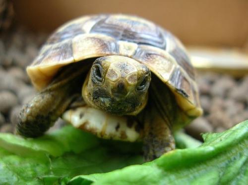 Informacion sobre las tortugas domesticas