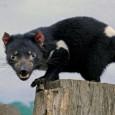 Informacion sobre el demonio de Tasmania