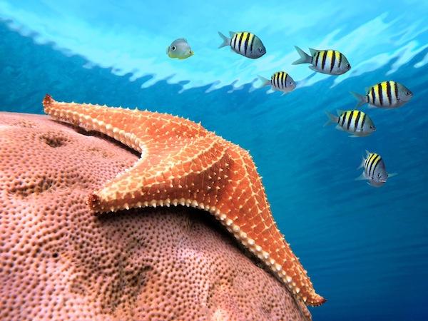 Información sobre la estrella de mar