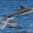 Información sobre el Delfín Listado 1
