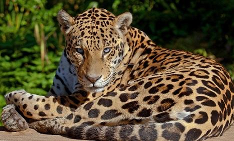 Más información sobre el Jaguar 3