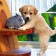 Animales domésticos 1