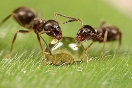 Información sobre las hormigas 2