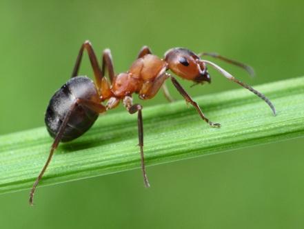 Información sobre las hormigas 3