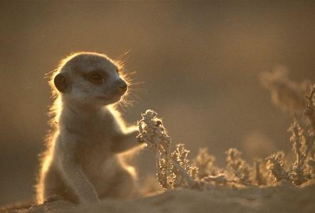Más información sobre la suricata 2