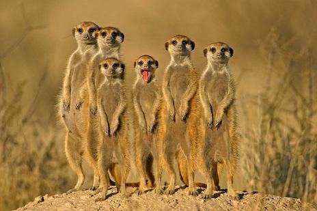 Más información sobre la suricata 3
