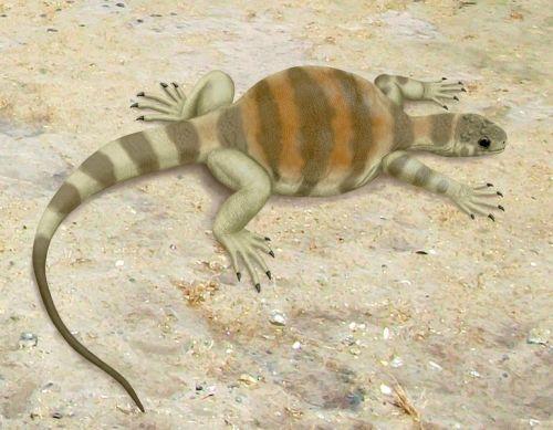 El origen de los reptiles anapsida