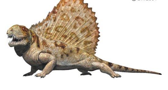 El origen de los reptiles synapsida
