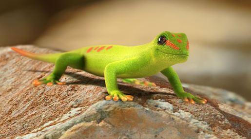 Información sobre el Gecko 1