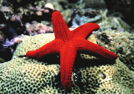 Información sobre la estrella de mar 1