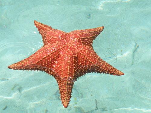 Información sobre la estrella de mar 2