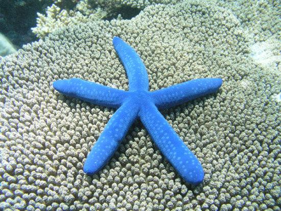 Información sobre la estrella de mar 3