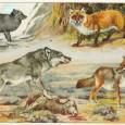 Información sobre la evolución del perro 1