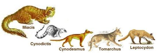Información sobre la evolución del perro