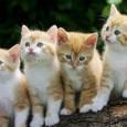 el origen del gato 3