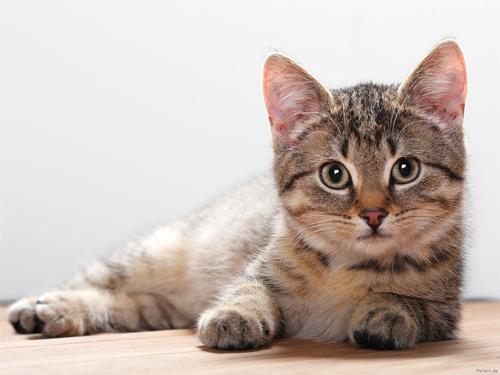 el origen del gato 4