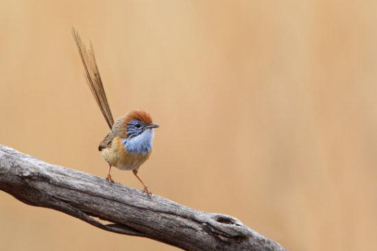 información sobre 8 aves amenazadas 1