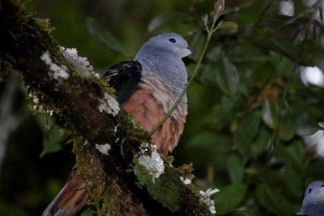 información sobre 8 aves amenazadas 2