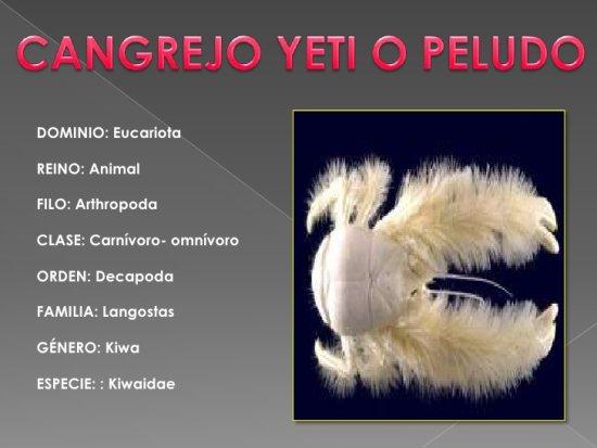 información sobre el cangrejo yeti 3