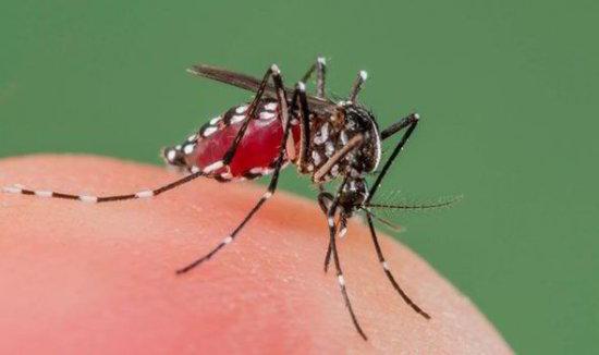 información sobre el mosquito 1