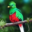 información sobre el quetzal 1