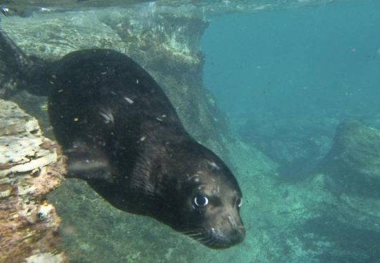 información sobre la foca monje del Mediterráneo 4