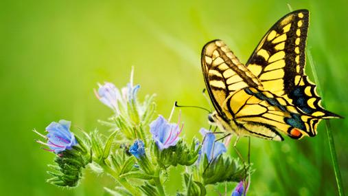 información sobre la mariposa 1