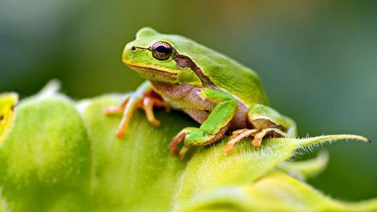 información sobre la rana 1