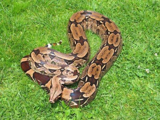 información sobre la serpiente 1