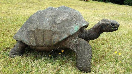 información sobre la tortuga 1