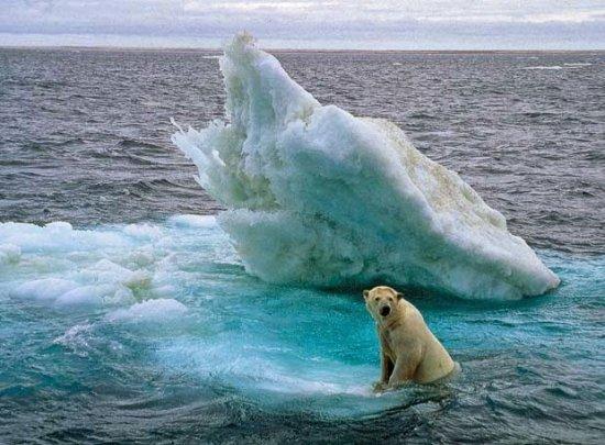 oso polar en peligro de extinción 2