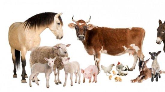 Información sobre los animales domesticos y salvajes 3