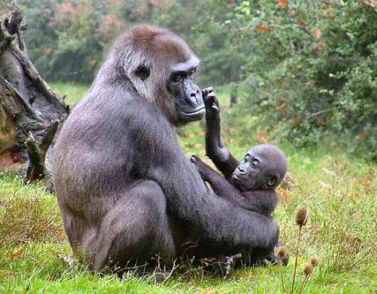 Información sobre los animales domesticos y salvajes 6