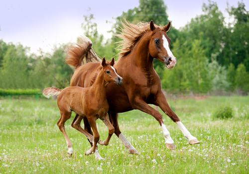 Información sobre el caballo 2