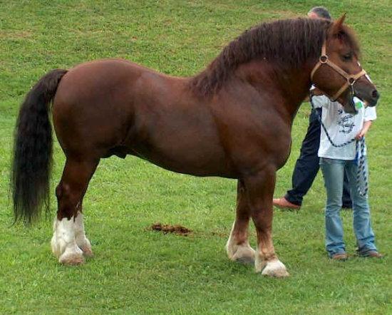 Información sobre el caballo 3